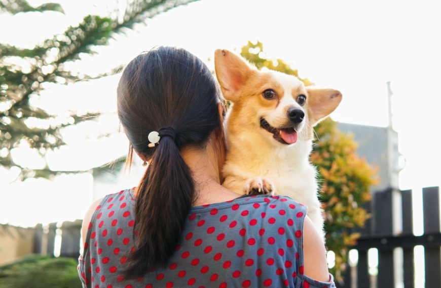 Finding a home in animal shelters